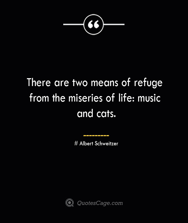 There are two means of refuge from the miseries of life music and cats.— Albert Schweitzer