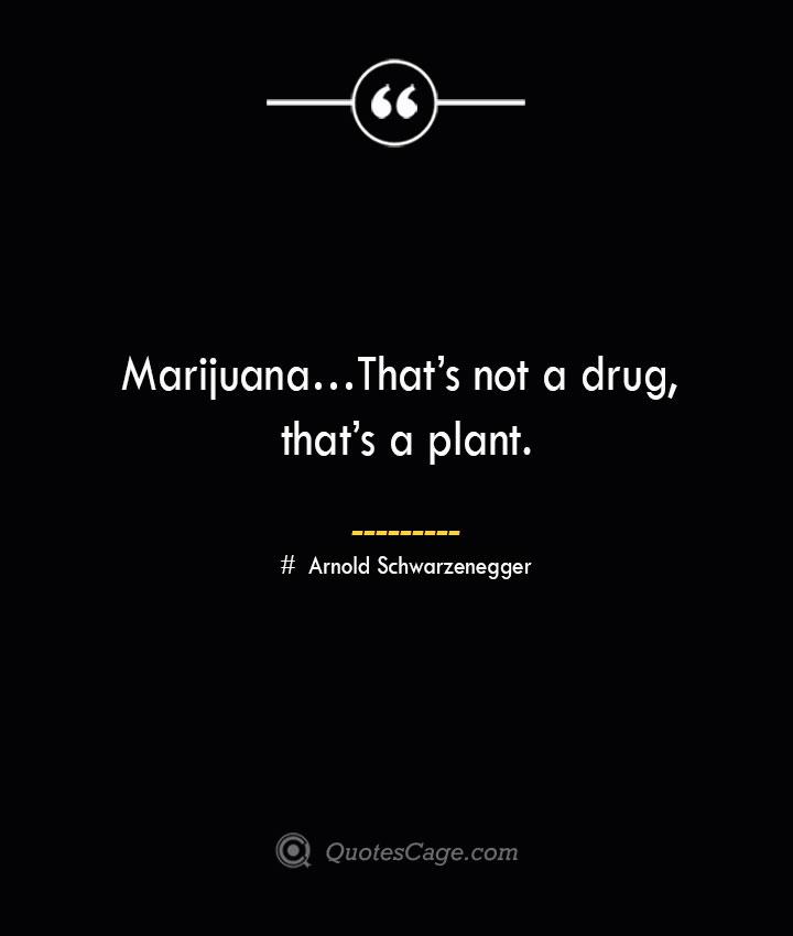 Marijuana… Thats not a drug thats a plant. — Arnold Schwarzenegger 1